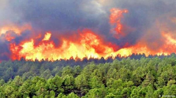 آتش سوزی جنگل های ایران,اخبار اجتماعی,خبرهای اجتماعی,محیط زیست