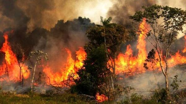 آتش گرفتن پارک افرا,اخبار اجتماعی,خبرهای اجتماعی,محیط زیست
