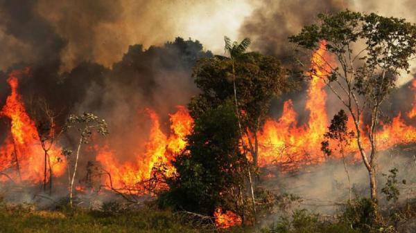 آتش سوزی در جنگل,اخبار علمی,خبرهای علمی,طبیعت و محیط زیست