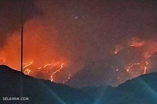 آتش سوزی در جنگلهای خاییز,اخبار اجتماعی,خبرهای اجتماعی,محیط زیست