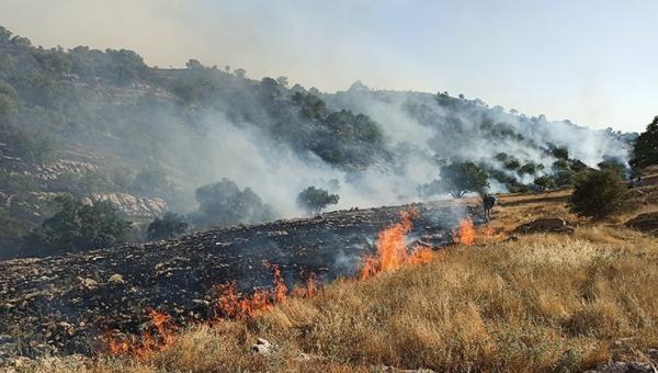 آتشسوزی کوه خائیز,اخبار اجتماعی,خبرهای اجتماعی,محیط زیست