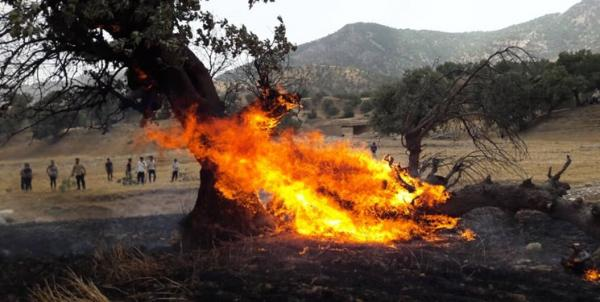 آتش سوزی خائیز,اخبار اجتماعی,خبرهای اجتماعی,حقوقی انتظامی