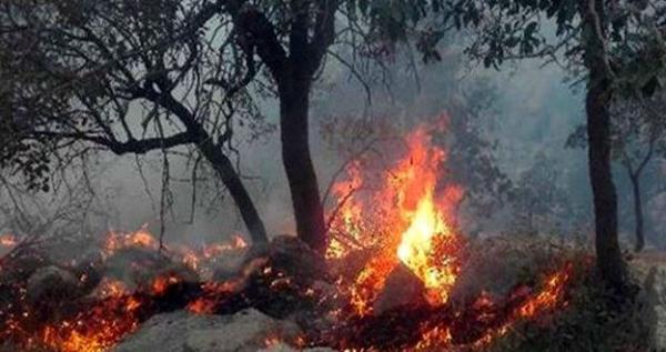 آتشسوزی در جنگلهای گچساران,اخبار اجتماعی,خبرهای اجتماعی,محیط زیست