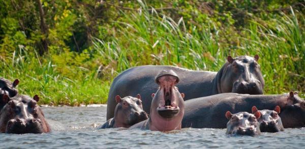 مشکلات اسبهای آبی قاچاقچی معروف برای کلمبیا,اخبار جالب,خبرهای جالب,خواندنی ها و دیدنی ها