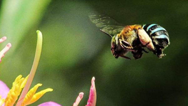 حقه زنبورها برای گل دادنِ گیاهان,اخبار علمی,خبرهای علمی,طبیعت و محیط زیست