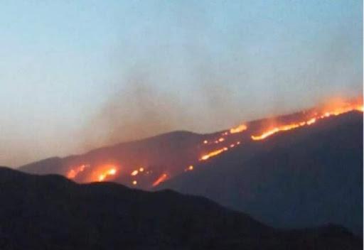 آتش سوزی خائیز در خوزستان و کهگیلویه و بویراحمد,اخبار اجتماعی,خبرهای اجتماعی,محیط زیست