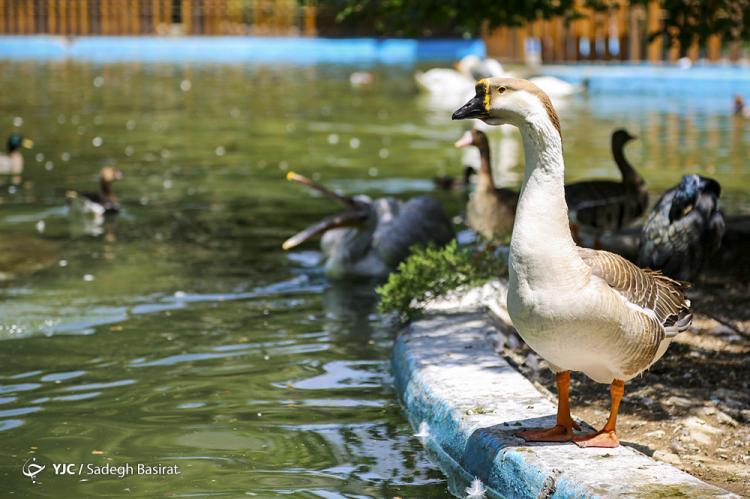 تصاویر باغ پرندگان اصفهان,عکس های باغ پرندگان اصفهان,تصاویری از باغ پرندگان در اصفهان
