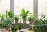 گیاهان اپارتمانی ناقل کرونا,اخبار علمی,خبرهای علمی,طبیعت و محیط زیست