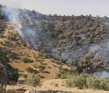 آتش سوزی منطقه حفاظت شده خائیز کهگیلویه,اخبار اجتماعی,خبرهای اجتماعی,محیط زیست