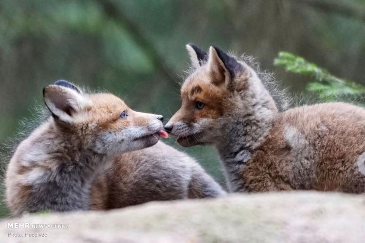 تصاویر منتخب حیات وحش هفته,عکس حیوانات,تصاویری از حیات وحش