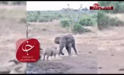 فیلم/ نبرد فیل خشکمین با کرگدن