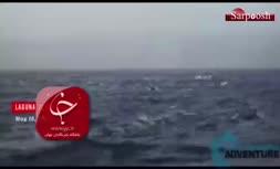 فیلم/ شنای دسته جمعی هزار دلفین در سواحل آمریکا