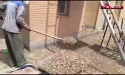 فیلم/ حمله باورنکردنی ملخ ها در نائین اصفهان