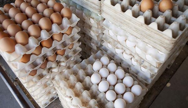 علت فازایش قیمت تخم مرغ و گوشت قرمز,اخبار اقتصادی,خبرهای اقتصادی,کشت و دام و صنعت