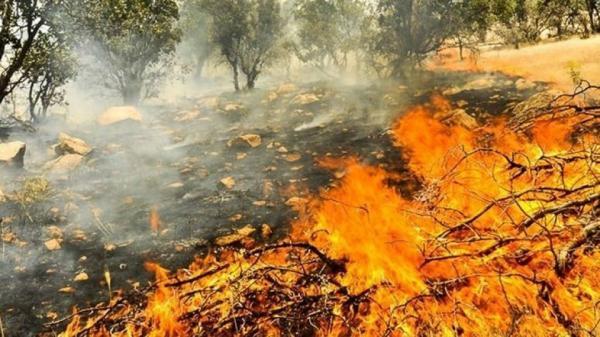 آتشسوزی در جنگلها و مراتع کشور,اخبار اجتماعی,خبرهای اجتماعی,محیط زیست