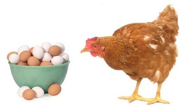 افزایش قیمت مرغ در بازار,اخبار اقتصادی,خبرهای اقتصادی,کشت و دام و صنعت