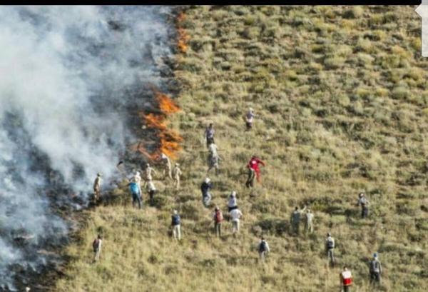 آتش سوزی جنگل های زاگرس,اخبار اجتماعی,خبرهای اجتماعی,محیط زیست