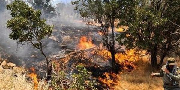 آتشسوزی جنگلهای اردل,اخبار اجتماعی,خبرهای اجتماعی,محیط زیست