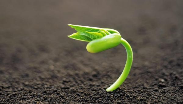 سلولز در گیاهان,اخبار علمی,خبرهای علمی,طبیعت و محیط زیست