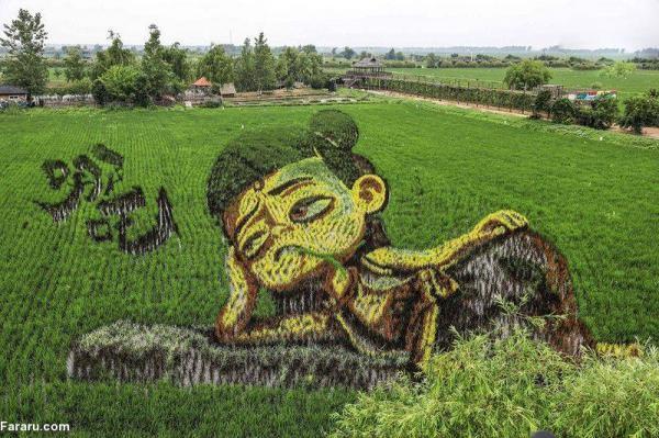 نقاشی های مزارع برنج,اخبار جالب,خبرهای جالب,خواندنی ها و دیدنی ها