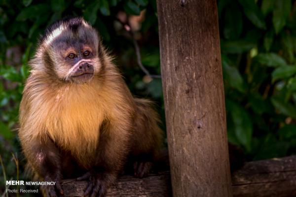 باغ وحش آمنویل فرانسه,اخبار جالب,خبرهای جالب,خواندنی ها و دیدنی ها