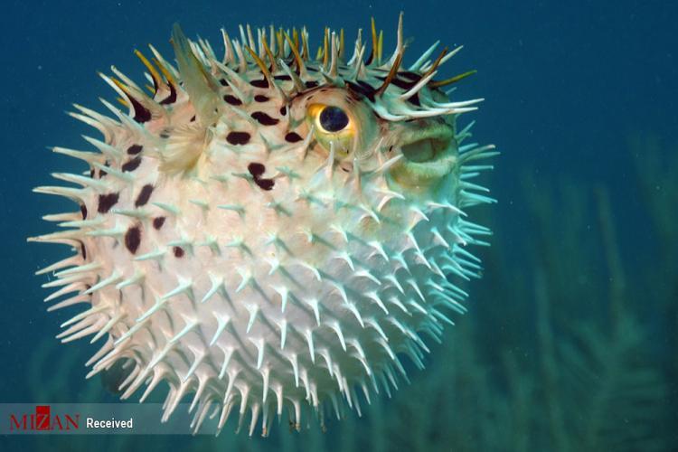تصاویر کشندهترین موجودات جهان,عکس های موجودات کشنده در دنیا,تصاویر جانوران خطرناک