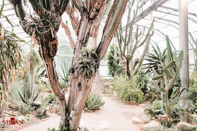 تصاویر زیباترین گلخانههای جهان,عکس های زیبا از گلخانهها,تصاویری از گلخانههای زیبای دنیا