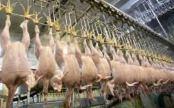 عوارض برای صادرات مرغ,اخبار اقتصادی,خبرهای اقتصادی,کشت و دام و صنعت
