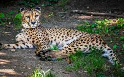 تصاویر حیوانات باغ وحش آمنویل فرانسه,عکس های حیوانات باغ وحش آمنویل فرانسه,تصاویری از باغ وحش آمنویل