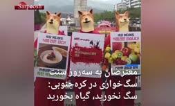 فیلم/ جنبش ضد سگخواری در کره جنوبی!