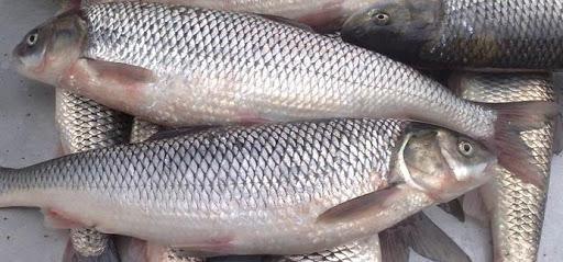 کاهش قیمت ماهی قزل آلا,اخبار اقتصادی,خبرهای اقتصادی,کشت و دام و صنعت