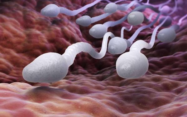 اسپرم,اخبار پزشکی,خبرهای پزشکی,تازه های پزشکی