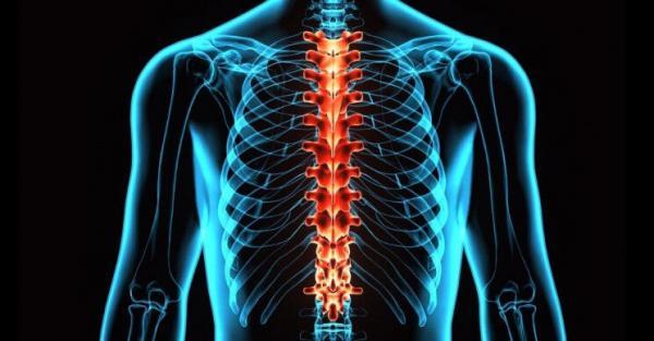 ایمپلنتی برای درمان آسیبهای نخاعی,اخبار پزشکی,خبرهای پزشکی,تازه های پزشکی