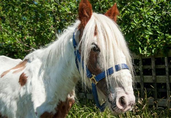 اسبی به اسم هایدی,اخبار جالب,خبرهای جالب,خواندنی ها و دیدنی ها