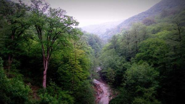 جنگلهای هیرکانی,اخبار اجتماعی,خبرهای اجتماعی,محیط زیست