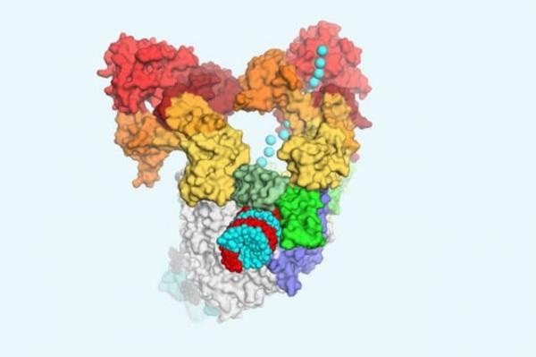 تصویر سیستم تکثیر کروناویروس ها,اخبار پزشکی,خبرهای پزشکی,تازه های پزشکی