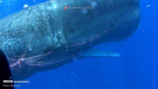 نهنگ عنبر,اخبار جالب,خبرهای جالب,خواندنی ها و دیدنی ها