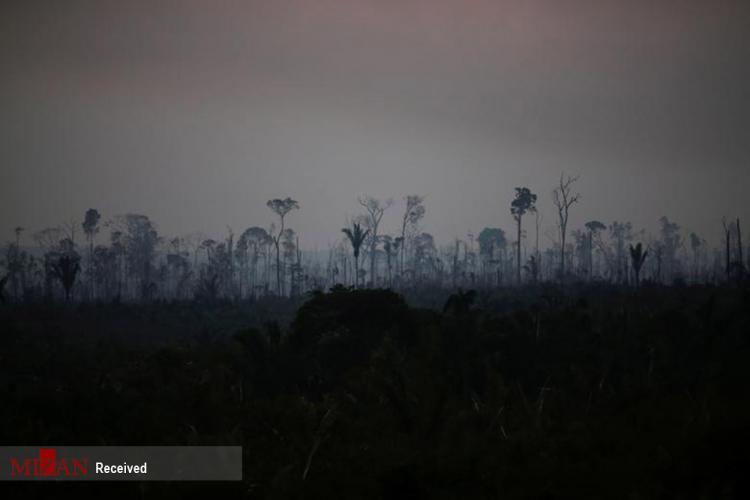 تصاویر آتش سوزی در جنگلهای آمازون,عکس های آتش گرفتن جنگل های آمازون,تصاویر آتش در جنگل های آمازون