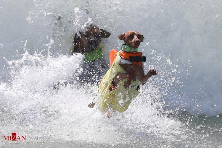 تصاویر سگ ها,عکس های سگ ها در آب,تصاویری از سگ ها در آب