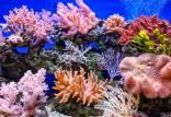 میکروبهای ۱۰۰ میلیون ساله,اخبار علمی,خبرهای علمی,طبیعت و محیط زیست
