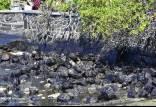 جزیره موریس,اخبار حوادث,خبرهای حوادث,حوادث امروز