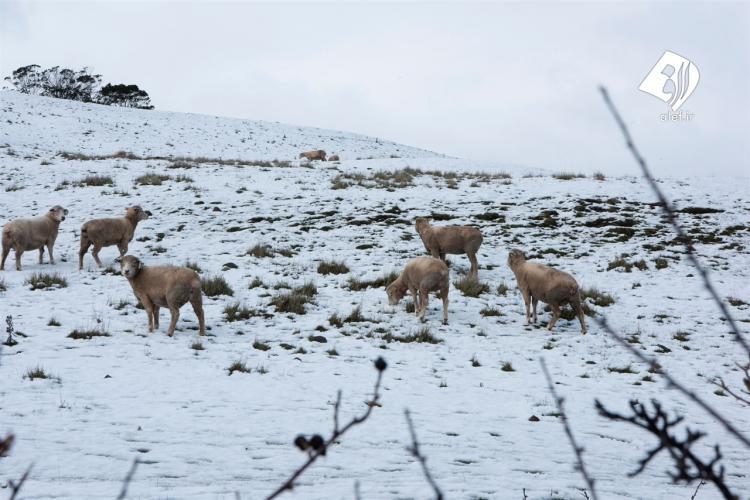 تصاویر بارش برف در تابستان,عکس های برف تابستانی در استرالیا,تصاویر بارش برف تابستانی در استرالیا
