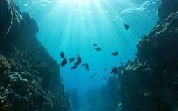 فروپاشی اکوسیستمهای دریایی,اخبار علمی,خبرهای علمی,طبیعت و محیط زیست