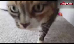 فیلم/ هشدار؛ حیوانات خانگی می توانند ناقل بیماری کرونا باشند