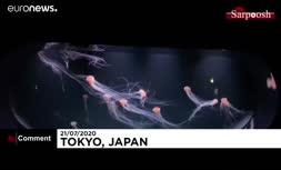 فیلم/ آکواریومی در ژاپن؛ آدمها در محاصره عروسان دریایی