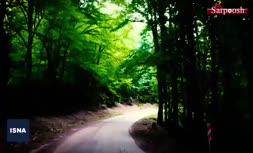 دادگاه بدون تشکیل جلسه، ۵۶۰۰ هکتاری جنگل های ساری را وقف شده اعلام کرد! + فیلم
