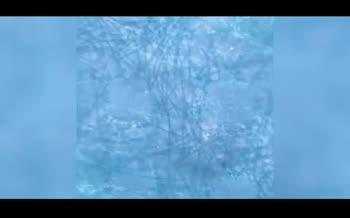 تصاویر میکروسکوپی از حضور ویروس کرونا روی ماسکها