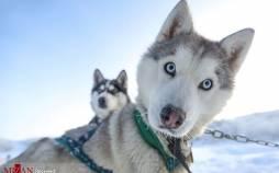 تصاویر حیوانات کرونایی,عکس های حیوانات مبتلا به کرونا,عکس هایی از حیوانات مبتلا به کروناویروس