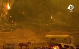 تصاویر آتش سوزی گسترده در کالیفرنیا,عکس های آتش سوزی در کالیفرنیا,تصاویر آتش گرفتن جنگل های کالیفرنیا