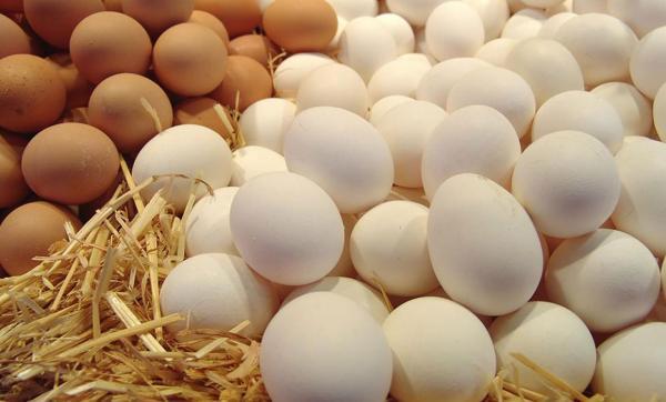 افزایش قیمت تخم مرغ وسویا,اخبار اقتصادی,خبرهای اقتصادی,کشت و دام و صنعت